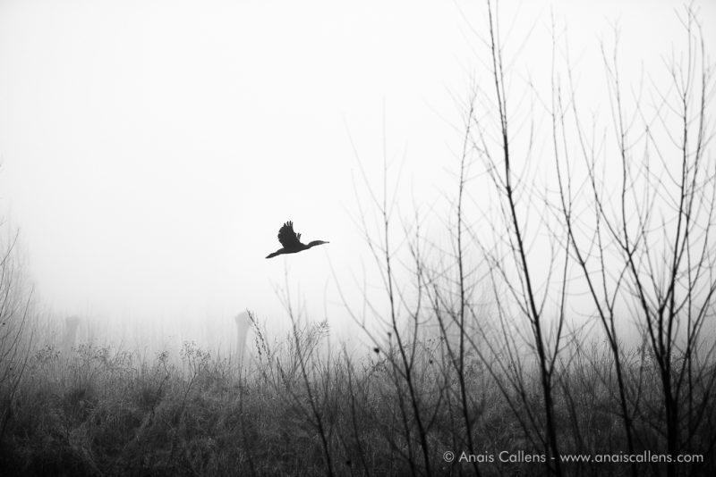ailes déployées